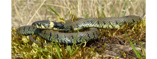 Snake & Reptile Fencing