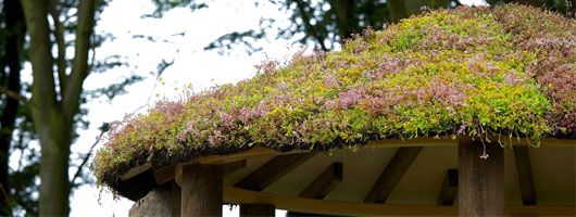 Sedum roofs from Enviromat
