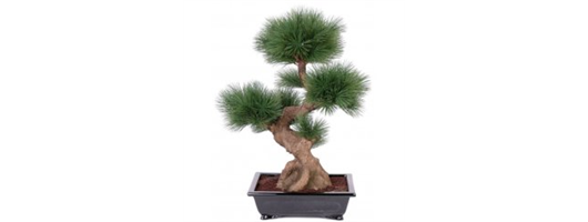 Pine Bonsai In Ceramic Dish