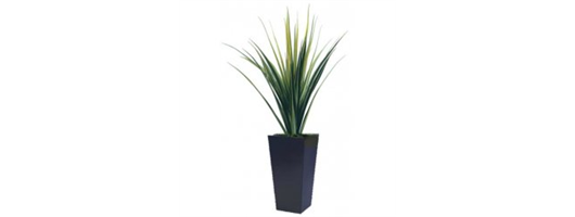 Large Green Pananus Set In Tall Contemporary Planter