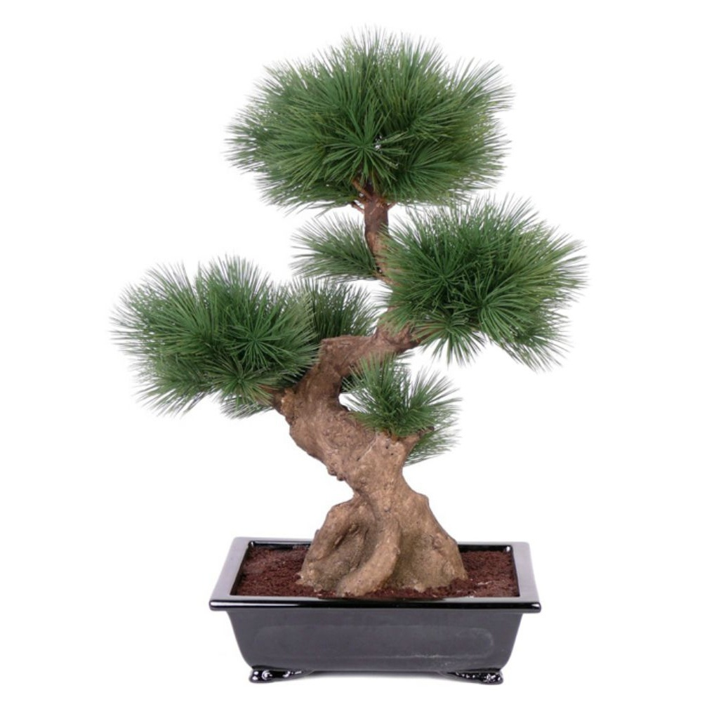 Pine Bonsai in high-gloss black dish