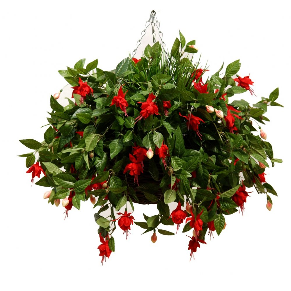 Red Fuchsia Hanging Basket