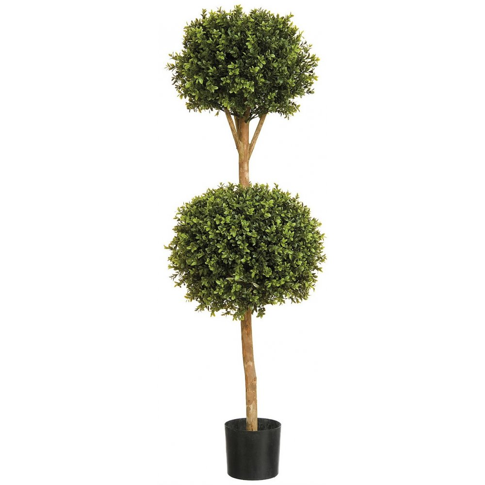 Buxus Double Ball Tree